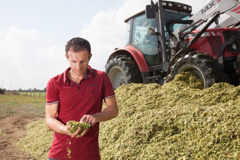 Agriculteur observant la qualité du maïs ensilage