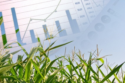 World Maize Prices Remain Under Pressure