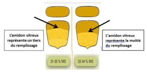 Maïs ensilage : déterminer le taux d'humidité du grain