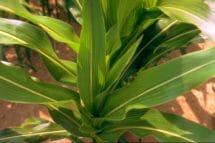 12 - 14 Blätter